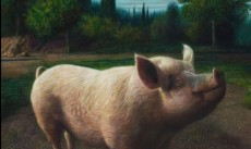 Vrolijk varken