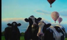 Cows & balloons